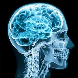 illustration of head and brain